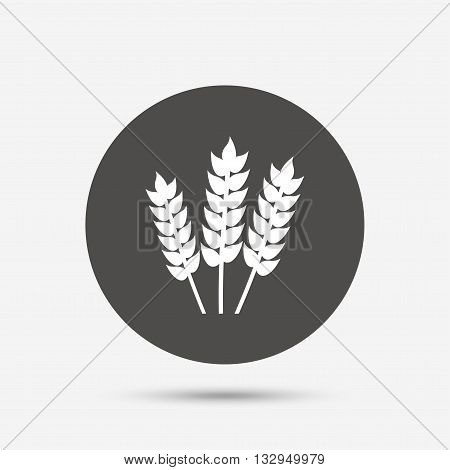 Agricultural sign icon. Gluten free or No gluten symbol. Gray circle button with icon. Vector