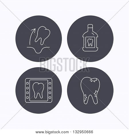 Tooth extraction, caries and mouthwash icons. Dental x-ray linear sign. Flat icons in circle buttons on white background. Vector