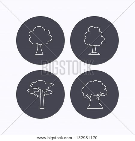 Pine tree, oak-tree icons. Forest trees linear signs. Flat icons in circle buttons on white background. Vector
