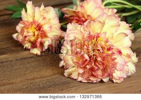 Peony background. Mountain tree peony. Chinese tree peony. Yellow and orange tree peony. Peony on wooden background. Floral background. Floral background from peonies. Paeonia suffruticosa.