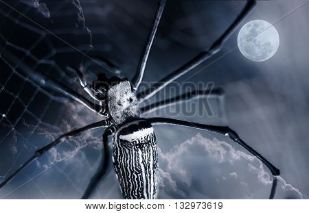 Halloween background. Closeup spider on spiderweb and beautiful nightly sky with full moon. The moon taken with my own camera no NASA images used. Outdoors. Macro.
