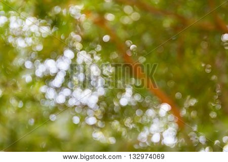 Fresh Soft Green Colour Bokeh Bush Tree And Sunlight For Abstract Romantic Background, Look Up Troug