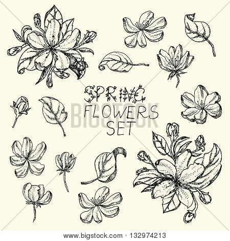 Set of Black and white Nature elements separately leaves flower blooming branches cherry pear flower sakura apple trees flower Vector nature botanical illustration