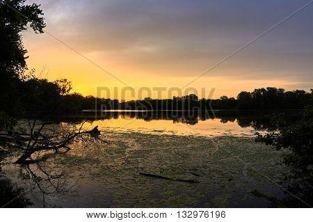Wide angle brilliant orange sunset with forest silhouette and sky reflecting on surface of algae covered freshwater lake at Skokie Lagoons in Illinois