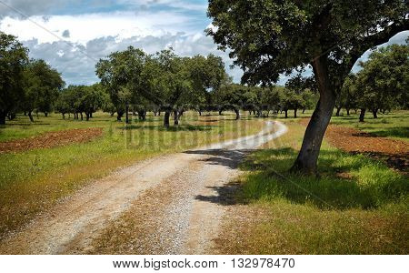 Beautiful Spring countryside landscape with a dirt trail and trees