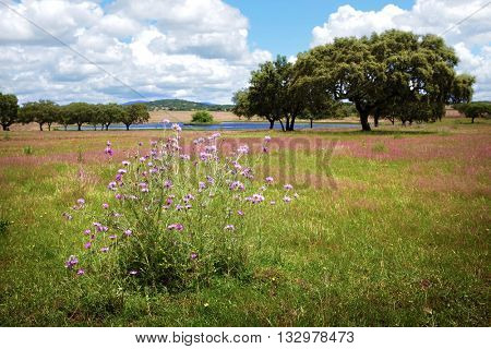 Countryside landscape with a lake and blooming wild flowers in Spring.