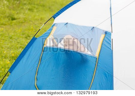 Cute Small Boy In A Tent. He Looks Through The Net