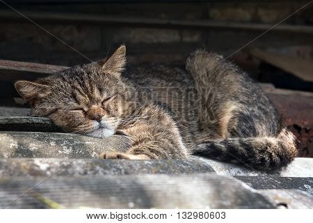 large gray tabby cat sleeping on the roof