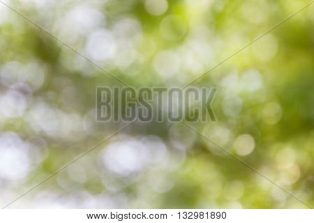 Dreamy Soft Glow Romantic Mood Tree Bush Bokeh Background, Abstract Sparkle Green And White Treet Bo