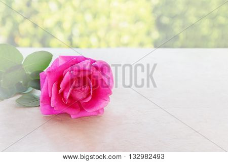 Single Pink Rose In Soft Mood On Classic Table And Natural Tree Bokeh Green Background, Romantic Pin