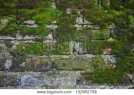 Old dirty brick wall construction covered in green moss