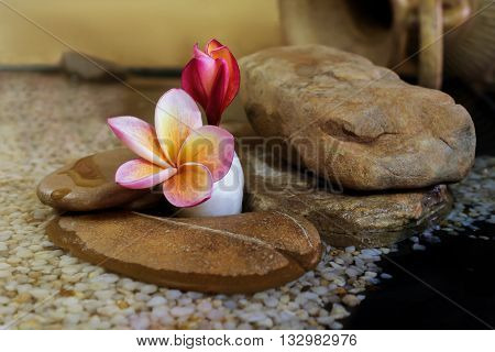Sweet Pink Yellow Flower Plumeria Or Frangipani On Pebble Rock In Soft Sepia And Antique Colour Tone