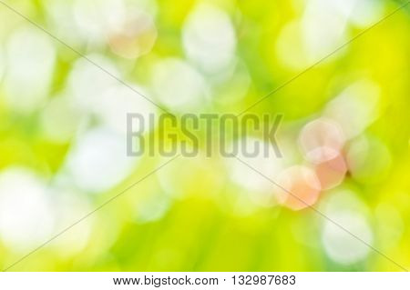 Blurring background of summer orchard with sun glare on the leaves and berries on a sunny day
