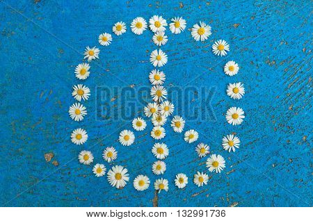 Peace sign peace symbol peace design created of daisy flowers on textured blue background