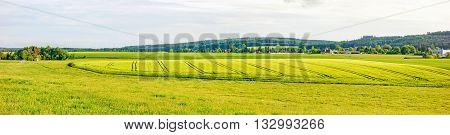 Farmland Panorama - Wheat Field