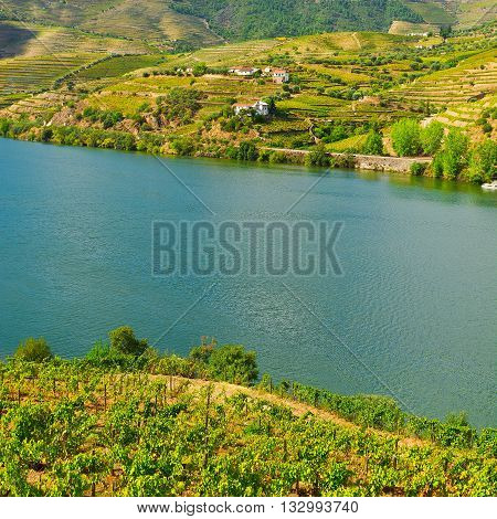 Vineyards in the Valley of the River Douro Portugal