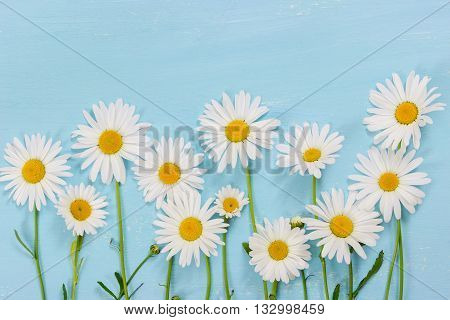 Chamomile Flowers On Light Blue Wooden Background.