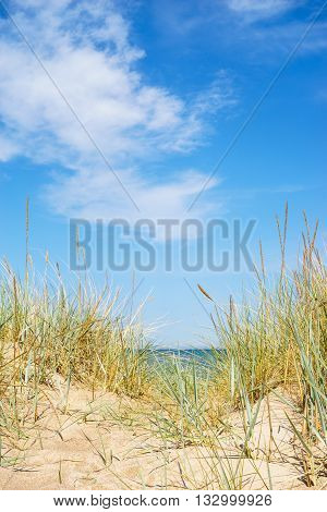 Baltic sea wild sandy beach with sedge grass against scenic cloudscape vertical composition