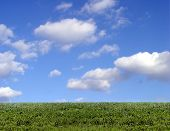 picture of clouds sky  - background of sky and grass - JPG