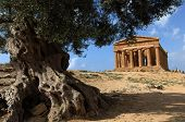 picture of sicily  - ancient temple of concordia in Agrigento - JPG