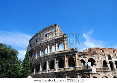 colosseo with a tree