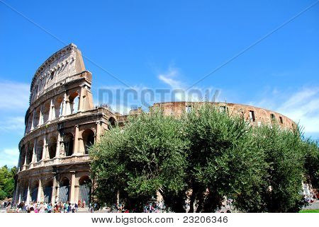 colosseo over a tree