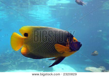 Emperfish