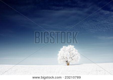 Solo árbol congelado en campo cubierto de nieve y un cielo profundamente azul
