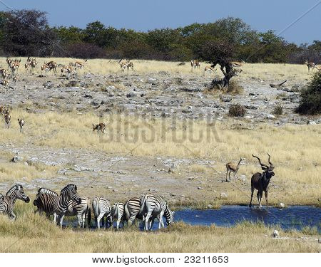 Waterhole Africano