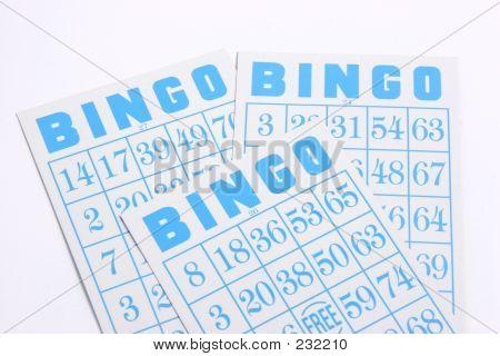 Bingo 02