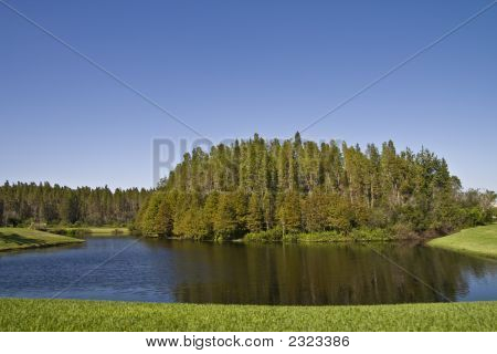 Bald Cypress Cluster On Pond