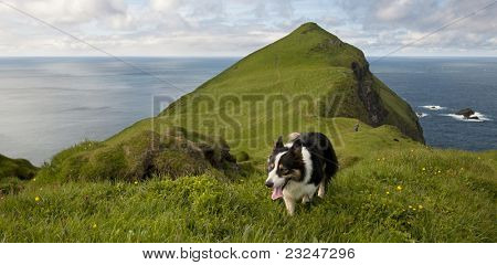 Man and his dogs hiking on Mykines, Faroe Islands