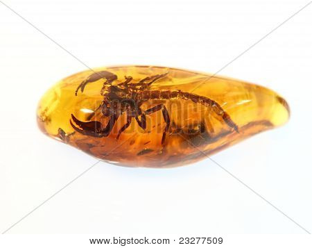 Escorpión de ámbar báltico