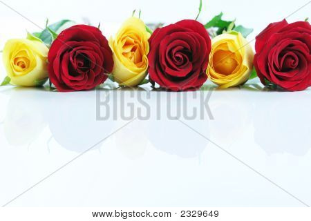Three Red And Three Yellow Roses.