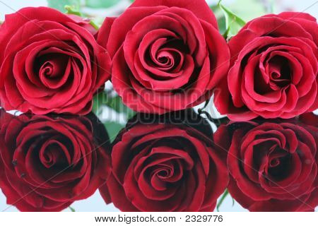 Three Red Roses On Reflective Surface