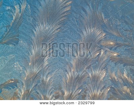 Spruces On Glass