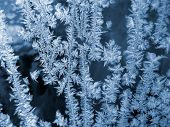 Frost Icy Flowers On A Glass