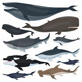 Whales, Dolphins Sharks And Other Nautical Mammals Animals. Mammal Whale And Humpback, Underwater Do poster