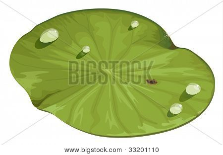Illustration of a lotus leaf - EPS VECTOR format also available in my portfolio.