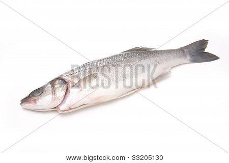 Sea bass (whole fish)