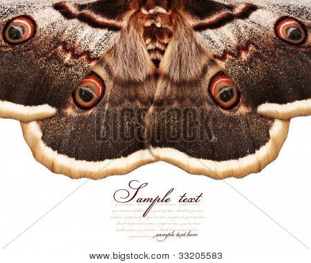butterfly wings isolated on white background