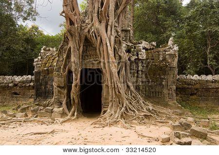 Overgrown gateway, Angkor, Cambodia