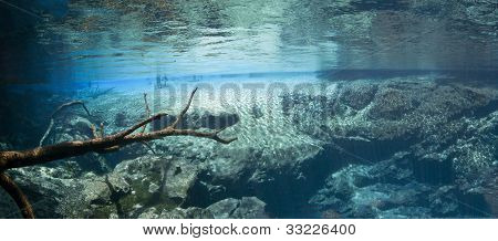 Cypress Springs Underwater Scenic