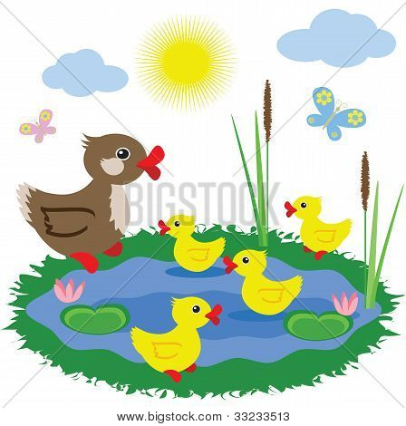 Pond with ducklings, vector.
