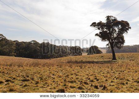A Rural Landscape. Tablelands Near Oberon. New South Wales. Australia.