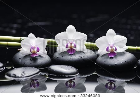 Spa still life with three orchid and zen stones with bamboo grove reflection