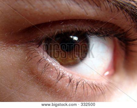 Brown Eye Glancing
