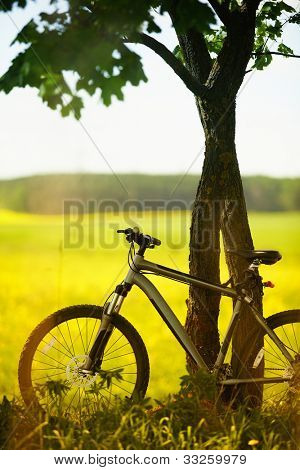 mountain bicycle outdoors in the field