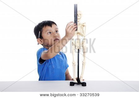 Boy Measures A Human Skull