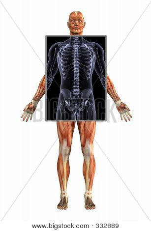 Anatomy Of Muscles With Xray - Male